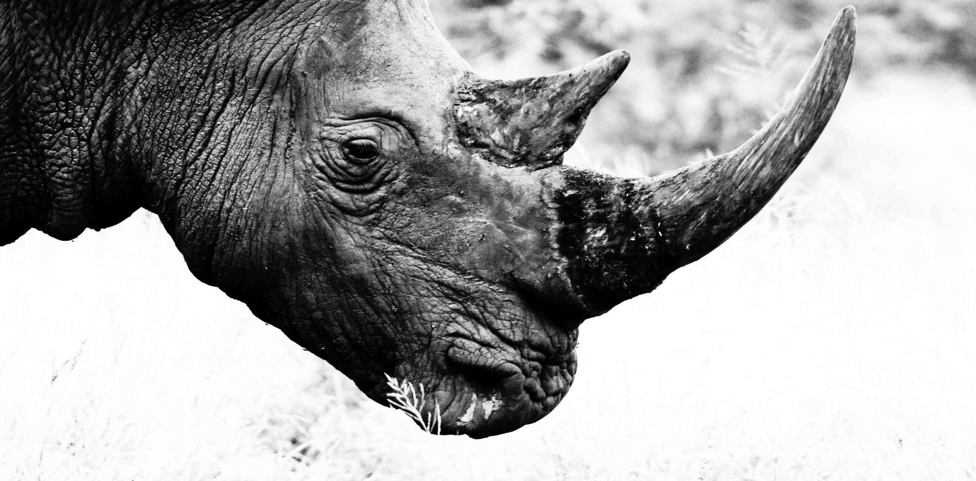Follow The Guns Report on Rhino Poaching and Wildlife Crime